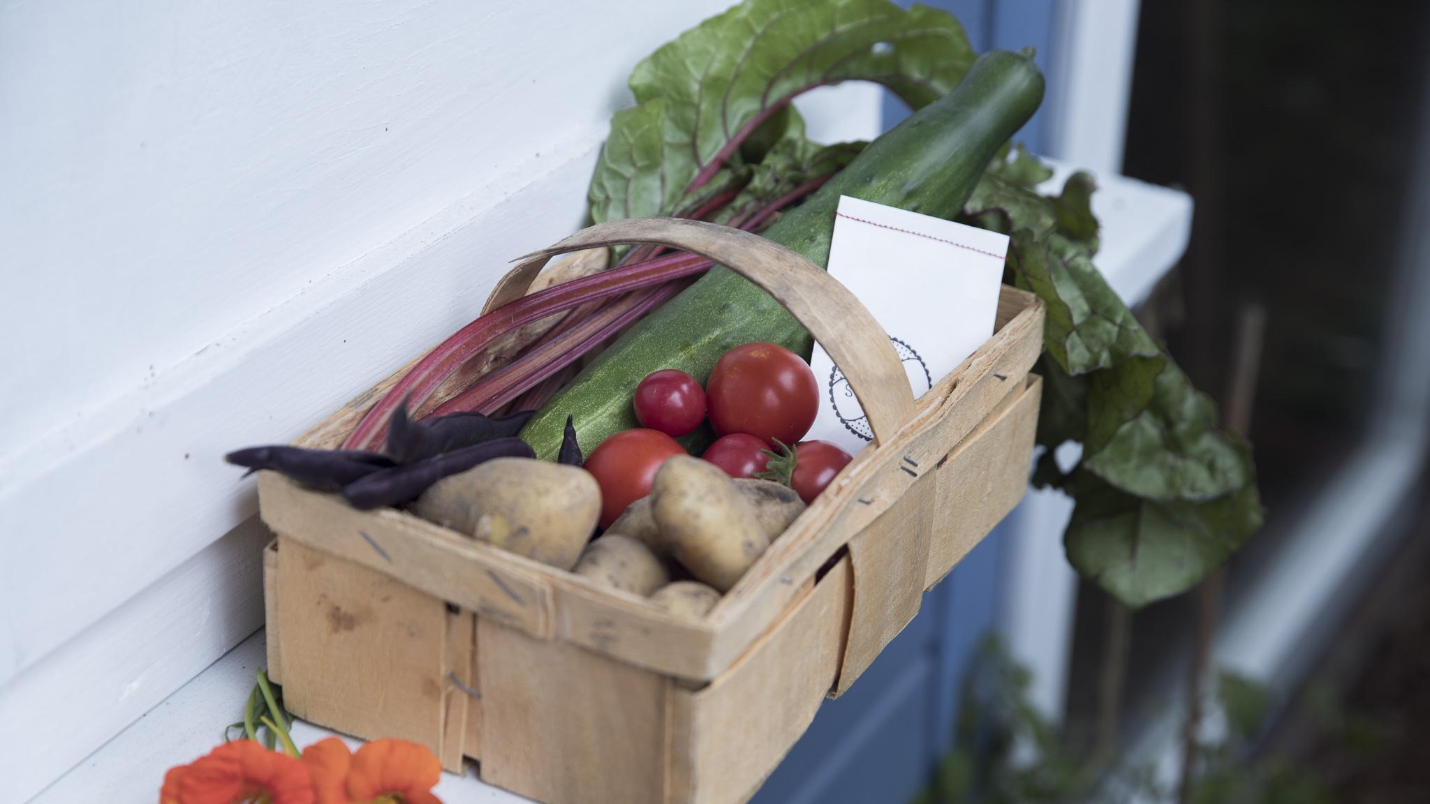 5 typische Anfängerfehler im Gemüsegarten und wie man sie vermeidet