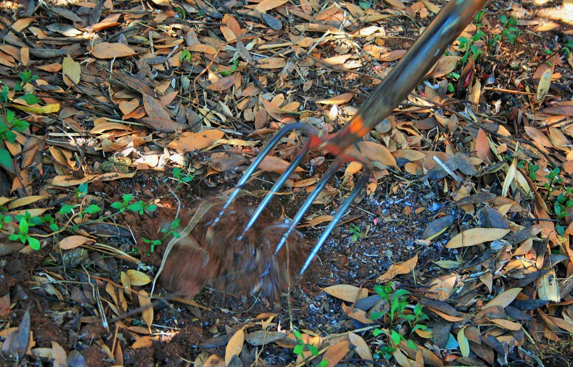 Umgraben oder nicht? Was Gärtner wissen müssen