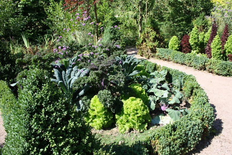 Auf gute Nachbarschaft – wer mit wem im Gemüsebeet