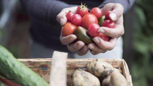 Tomaten selber ziehen – die besten Tipps und Tricks