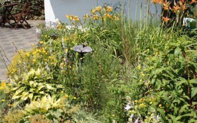 Hummelgarten 2019 gelbes Beet