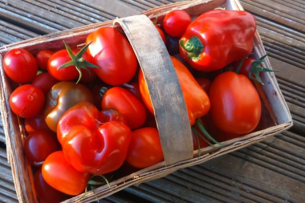 Tomatenernte und Paprika Oktober 2017 2